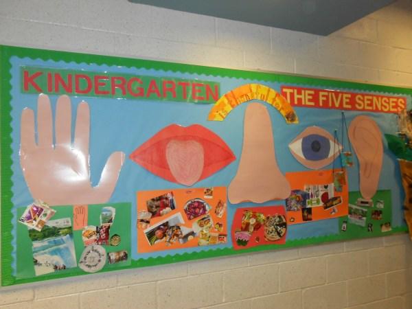 Kindergarten And 5 Senses - Bulletin Board Meri Cherry