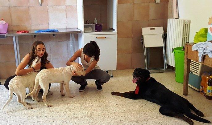 Come Far Socializzare I Cani