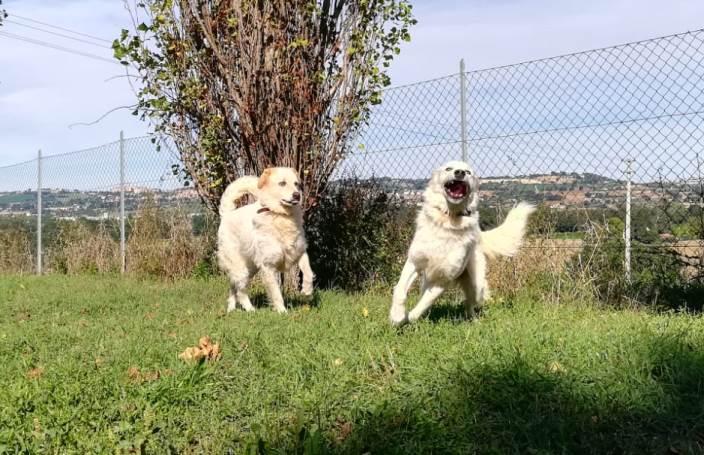 Cani Felici Tra Attività Ludiche Ed Educative