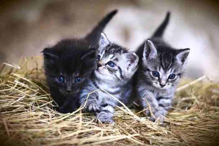 17 Febbraio Giornata Nazionale Del Gatto