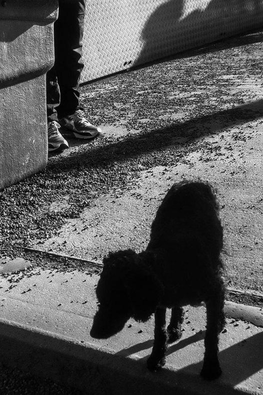 hund-(1-av-1)
