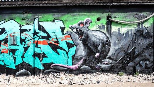 rat-(1-av-1)