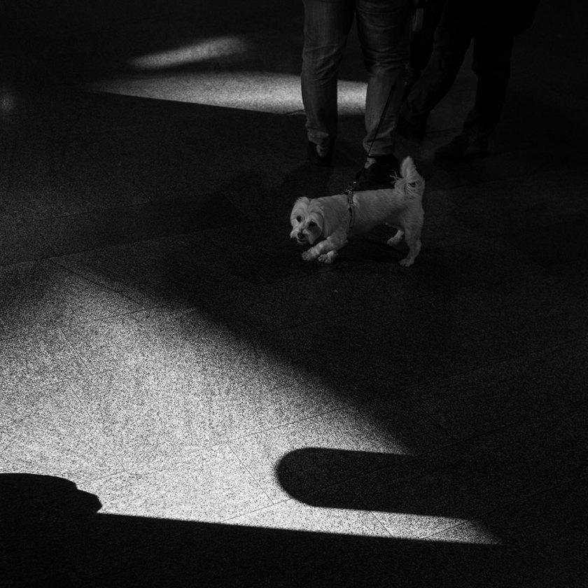 hund-skuggor
