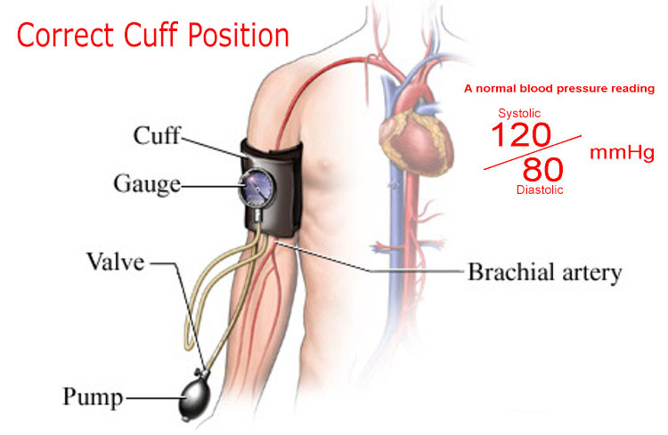 correct-cuff-position-in-bp-test