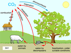 the carbon cycle diagram gcse outlet to light switch wiring class ix:science natural resources,atmosphere,biogeochemical cycles
