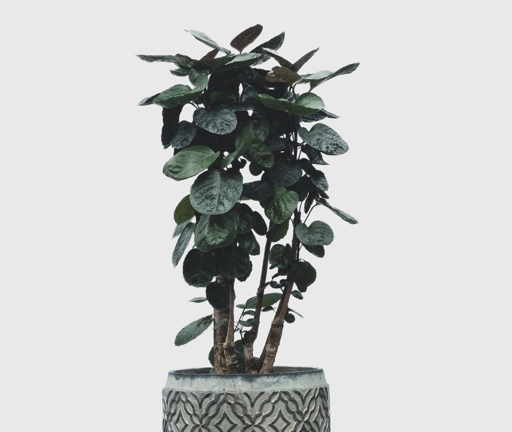 10 kamerplanten voor donkere plekken  Merkens Tuincentrum