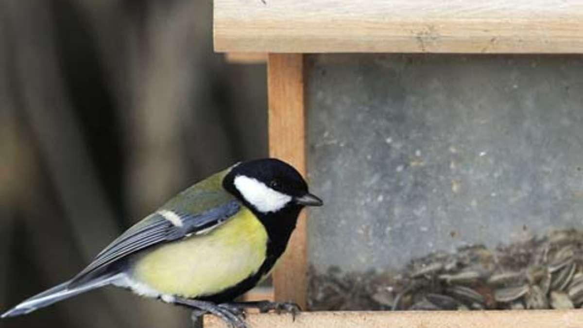 Malvorlage Vögel Am Futterhaus