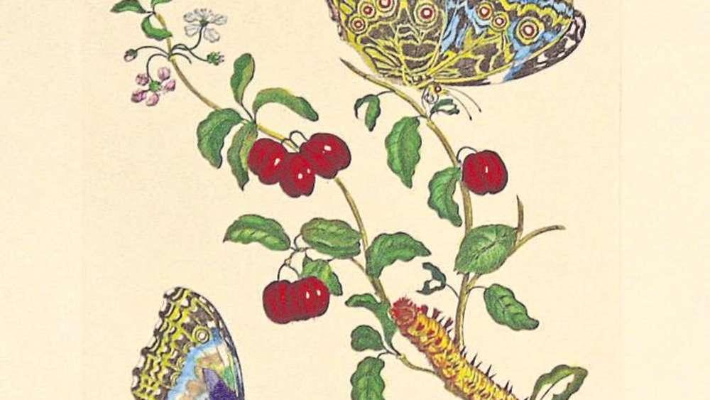 Historische Grafiken in der Galerie im Schlosspavillon