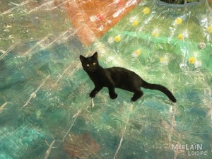 Wateroller - Chat - Saint Gely du Fesc - 2015 - 02