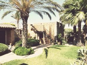 echte Dattelpalme auf Mallorca