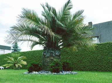 Palmen in Deutschland