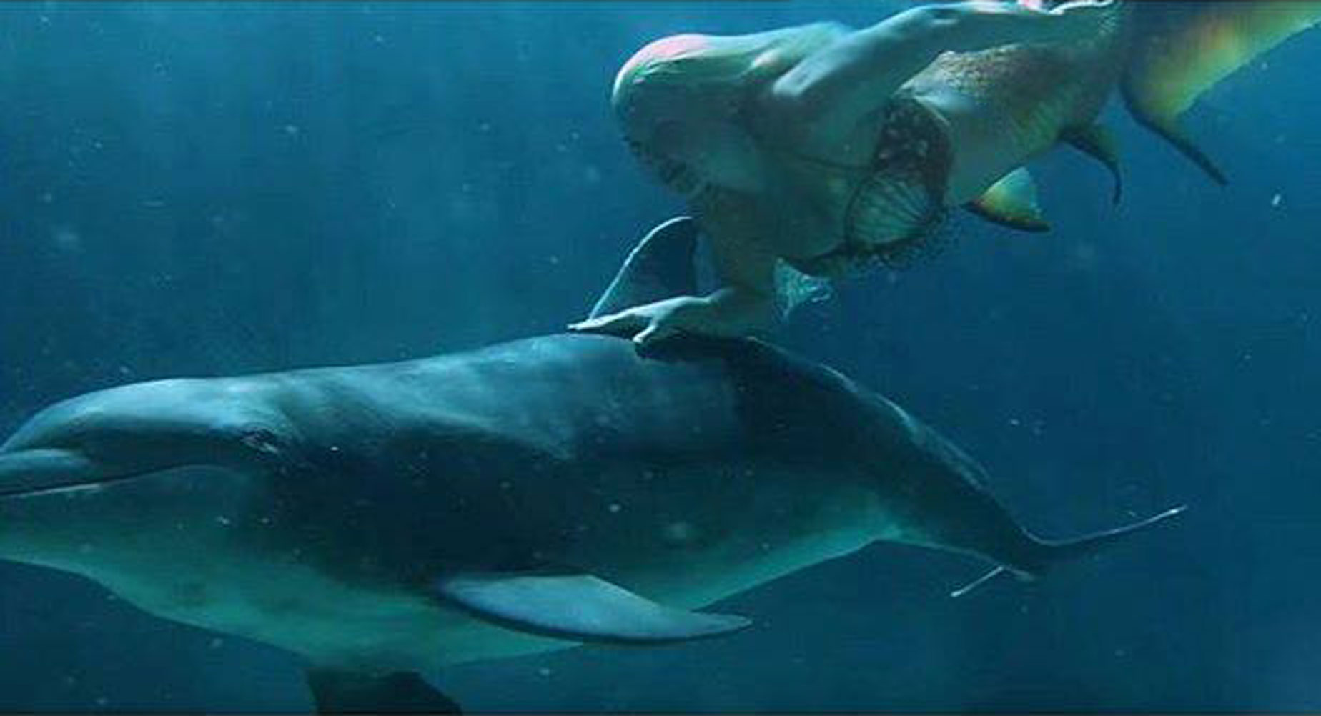 Mermaid Melissa Bonds With Dolphins In The Ocean A Real Life Fairy Tale  Mermaid Melissa A