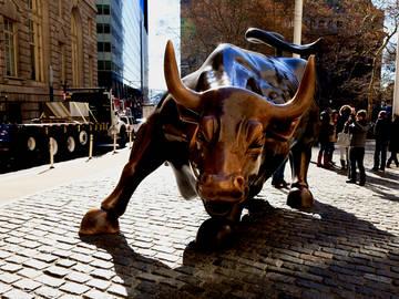 the history of bull