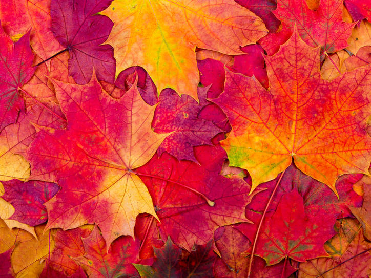 Hd Wallpaper Fall Leaf Change Is It Autumn Or Fall Merriam Webster