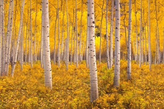 Fall Aspens Wallpaper Color Words To Describe Autumn Leaves Merriam Webster