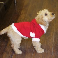 Dogs Christmas jumper. Santa costume with hood and pom pom