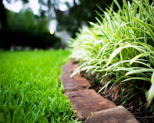 lawn care & landscaping services