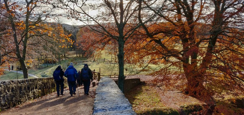 Group walk over stone bridge under trees in autumn foliage