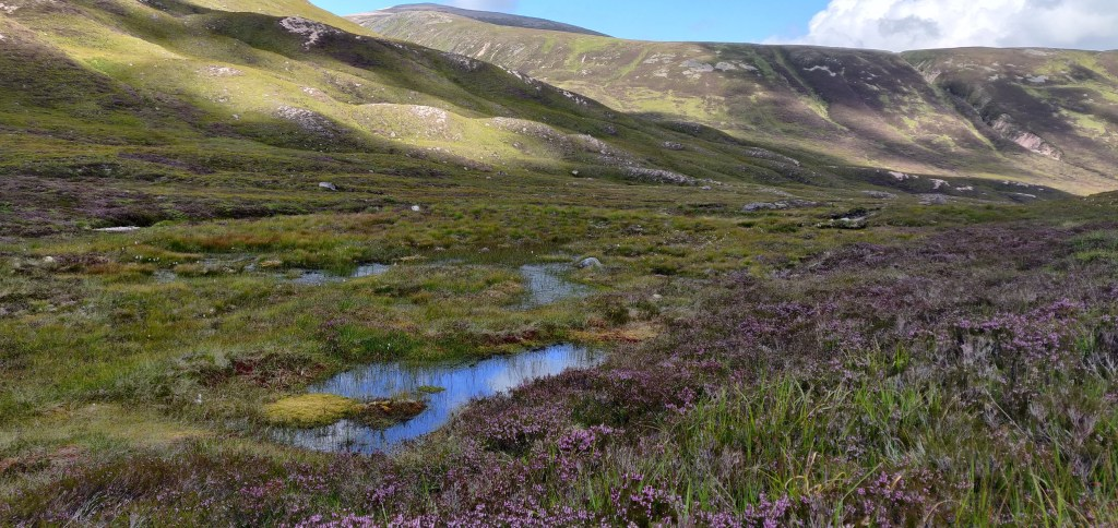 Bog pools in the Cairngorms surrounded by grass, moss and heather
