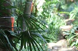 The Merwin Palm Collection is featured in The Bulletin of the National Tropical Botanical Gardens