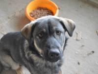 Adopta un prieten – Luci | O campanie Mesagerul de Sibiu și AnimalLife