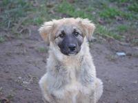 Adoptă un prieten – Teddy | O campanie AnimalLife și Mesagerul de Sibiu