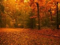 Cum va fi vremea până la sfârşitul lui octombrie