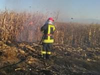 Numărul incendiilor de vegetație îi îngrijorează pe pompieri
