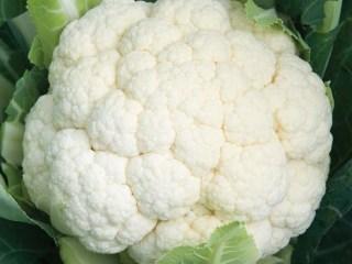 LEACURI DIN NATURĂ | Conopida (Brassica oleracea var. botrytis)