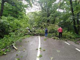 FOTO Putea să se termine tragic! Copac căzut peste o mașină