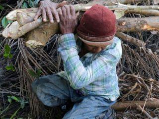 Cine îi apără pe paznicii pădurii?
