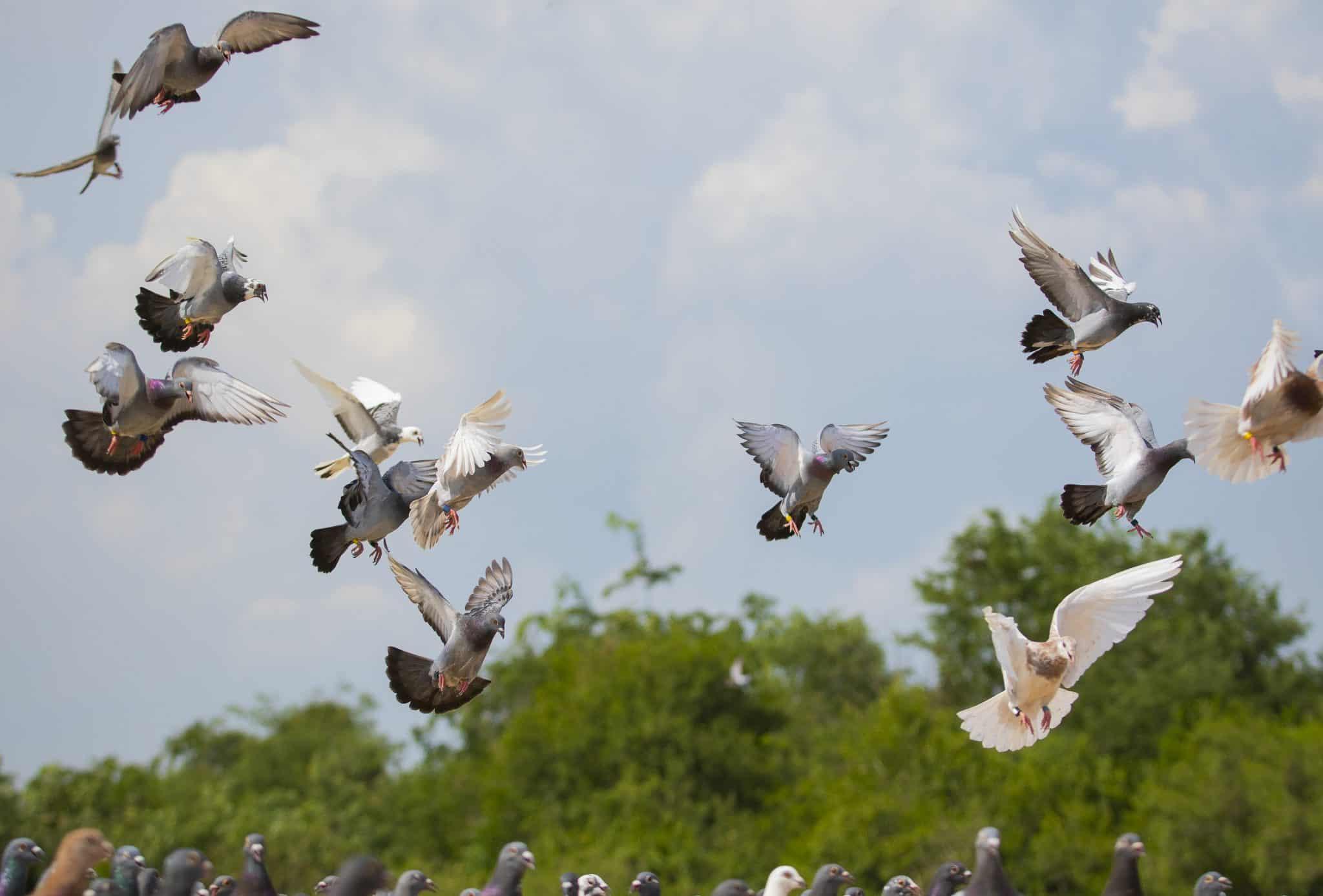 יום הציפורים הנודדות