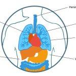 mesothelioma symptoms identify early warning signspleural symptoms (lungs)