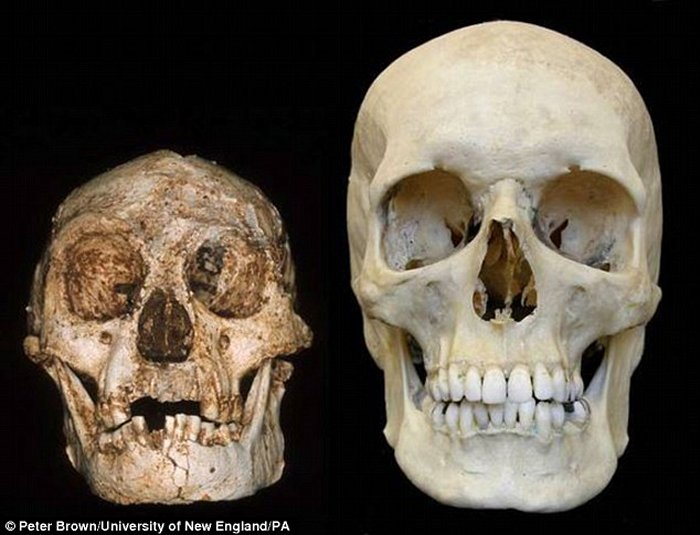 New Light On The Mysterious Hobbits – Discovered Teeth Suggest Hobbits Were A Separate Species