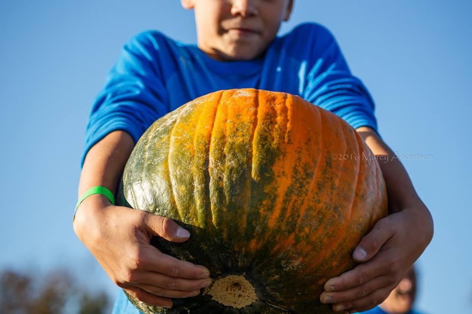 big pumpkin at messicks fall festival