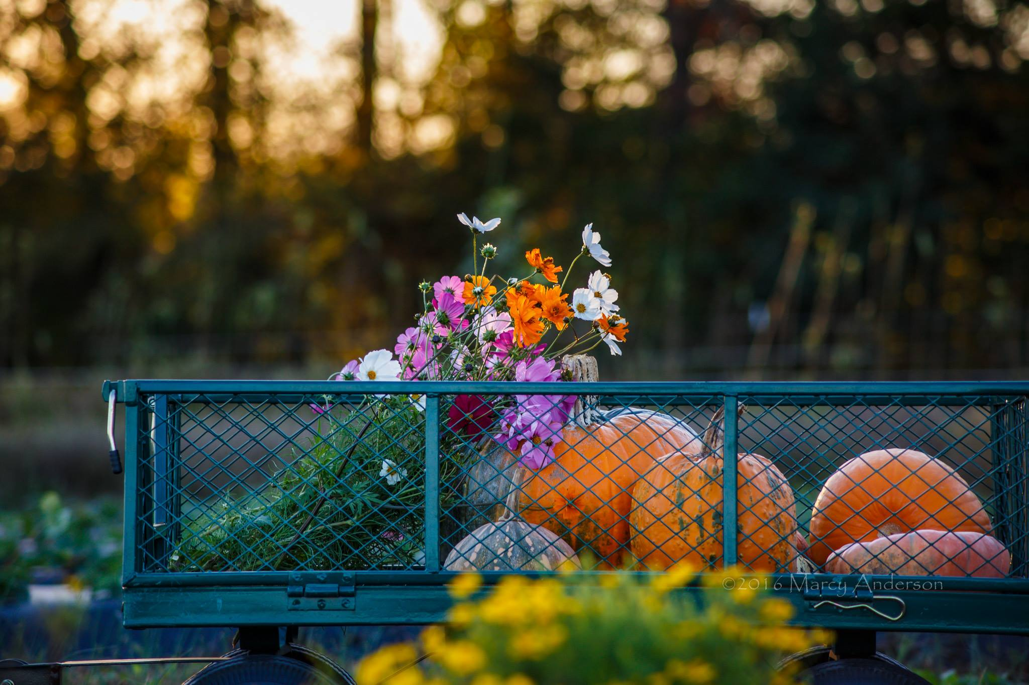 fall festival pumpkins and flowers