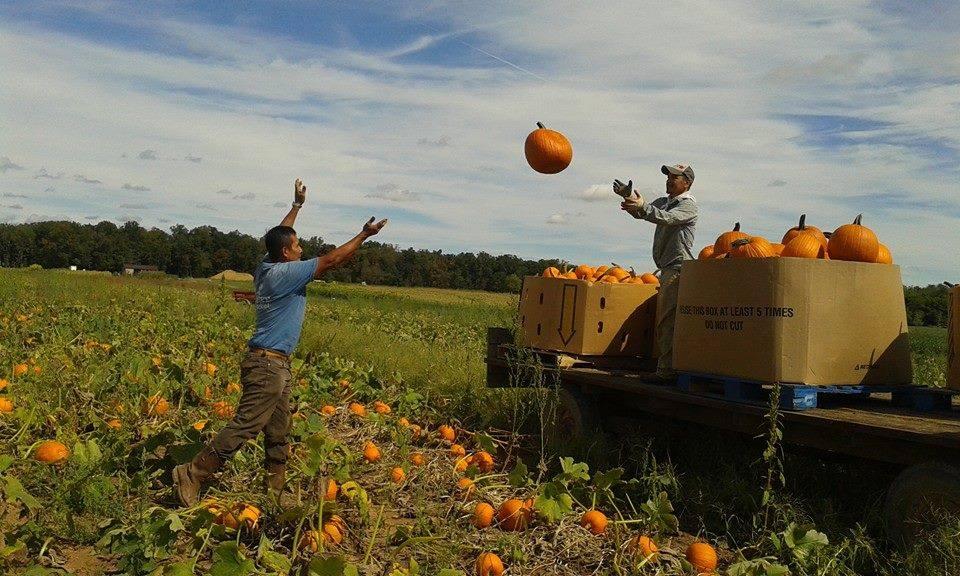 pumpkin tossing at messicks fall festival