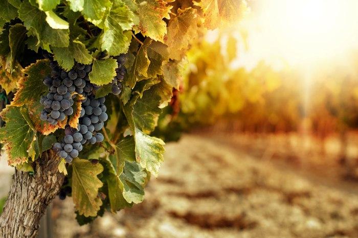 Cross tra le vigne di S. Anastasia a Castelbuono