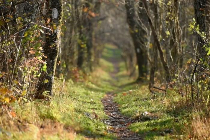 """Fervono i preparativi per il """"Monterosso Trail"""""""