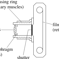 Glass Eye Diagram Parts Three Phase Wiring For House Pplato | Flap Phys 6.4: Optical Instruments