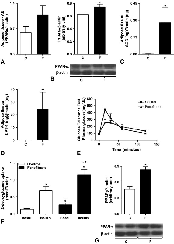 Increased expression of oxidative enzymes in adipose