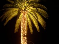 [how to string lights on a palm tree] - 28 images - palm ...