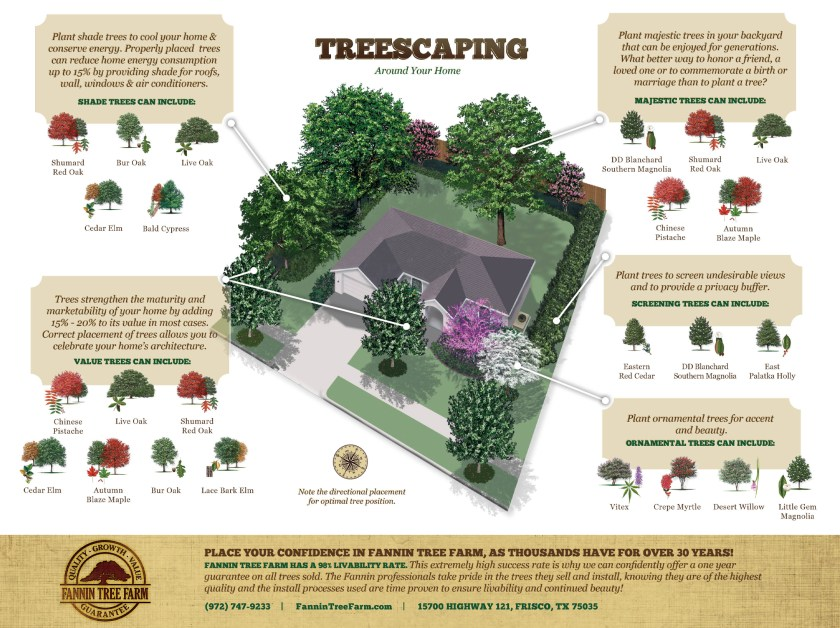 windbreak-trees-for-homes