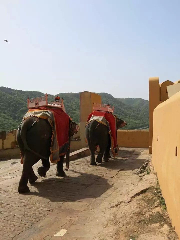 Elephants in Amber Fort