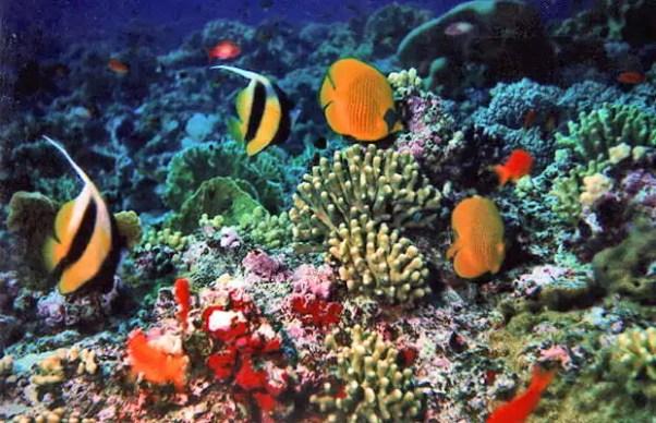 vita marina