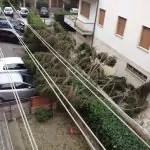 San giuliano Terme pisa01