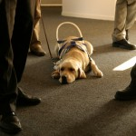 Assistance dogs in the workplace