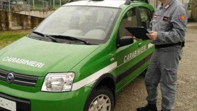 Photo of Nel 2020 aumenta l'impegno dei Carabinieri Forestali