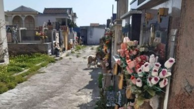Photo of Una capra pascola al cimitero di Locri…