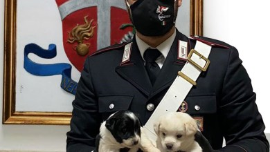 Photo of Carabinieri trovano tra i rifiuti e salvano 4 cuccioli di cane